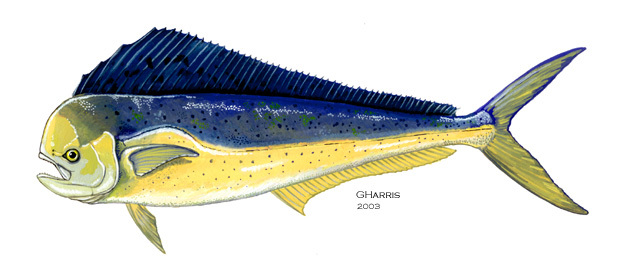 Mahi Mahi Fish facts and nutrition