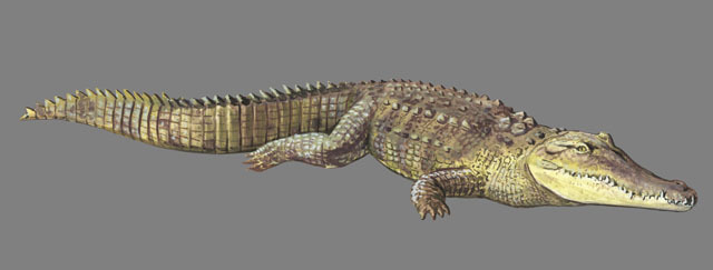 Crocodylus