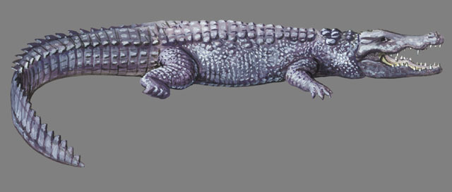 Crocodylus palustris
