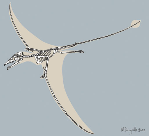 Eudimorphodon_skeleton