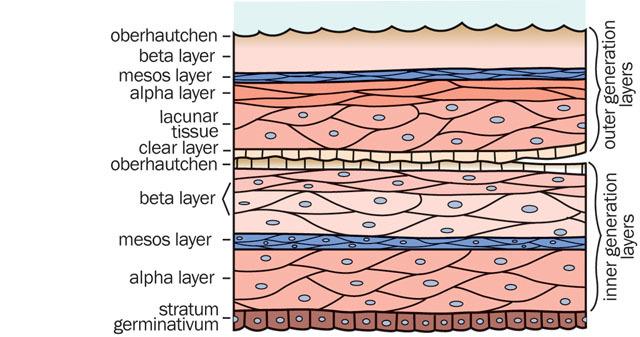 medium uv transmission through reptile skin shed