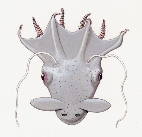 Vampyroteuthis