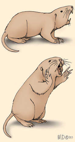 pocket_gopher_threat