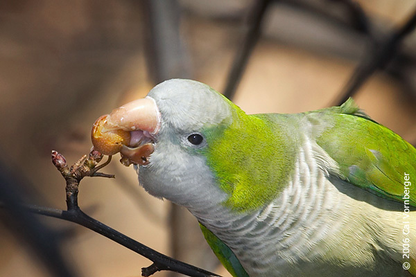 monkparakeet_feeding