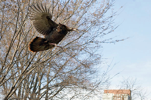 turkeyflight