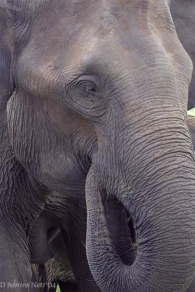 Elephantportrait2