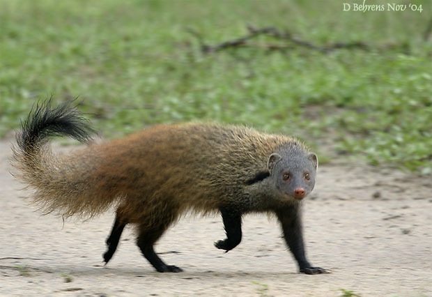 StripeNeckedMongoose