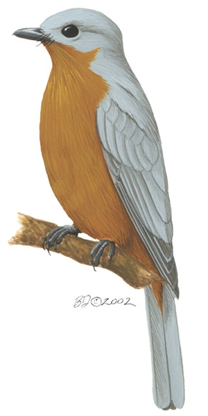 Empidornis_semipartitus