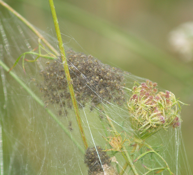 fishingspidernest