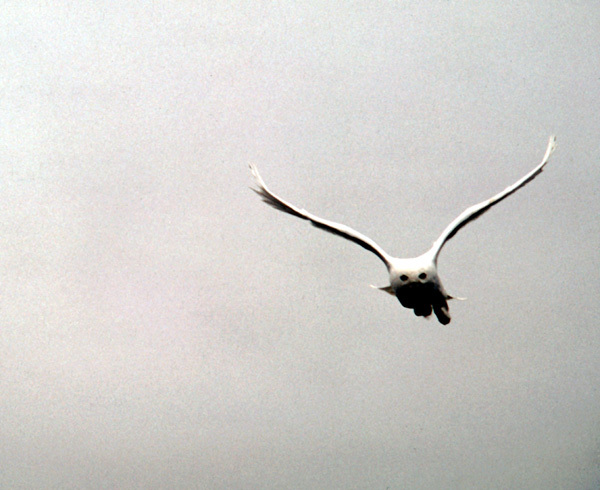 snowy_male_flying