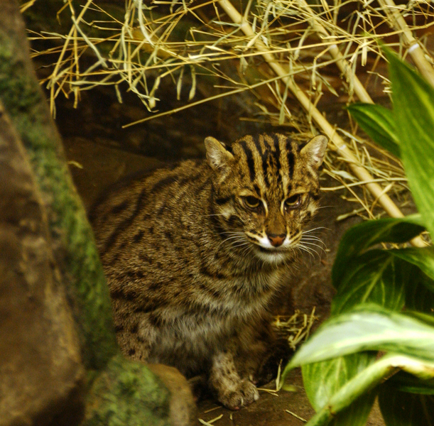 fishingcat3875