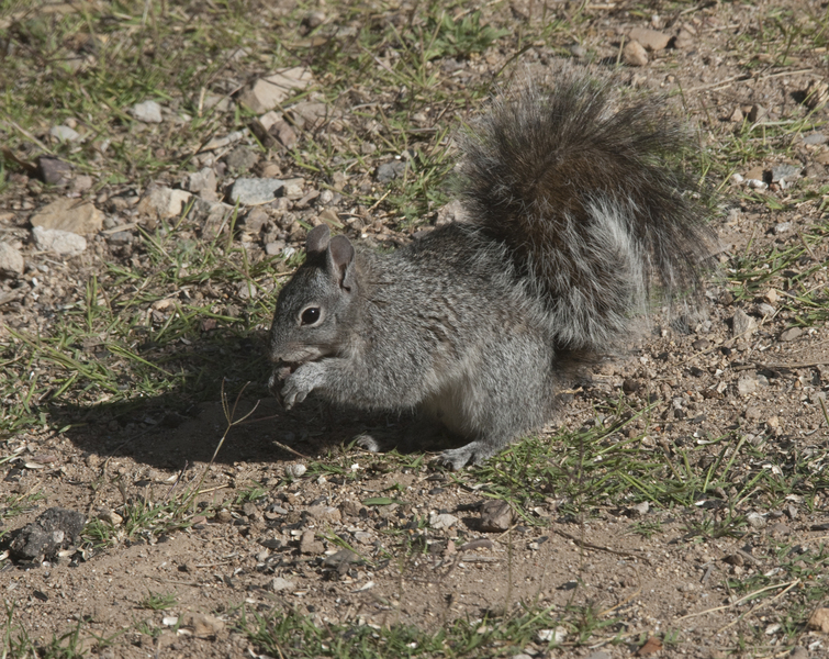 graysquirrel0424