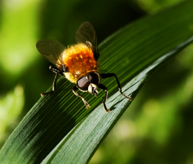 beefly0191