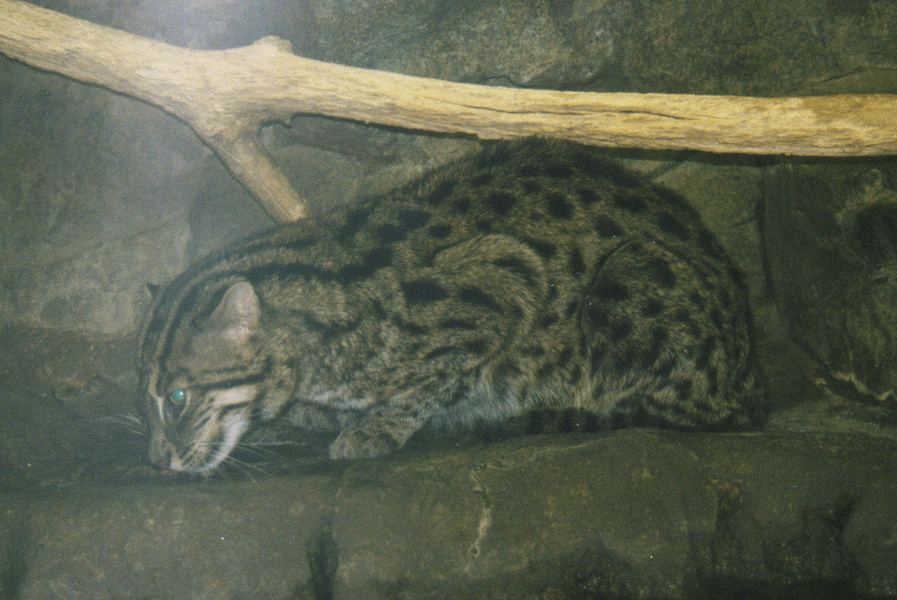 fishingcat