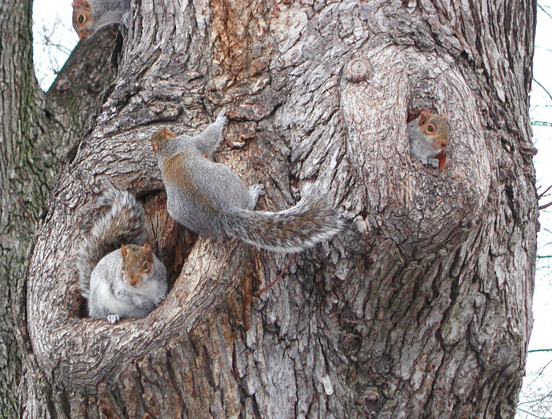 squirrelcondo