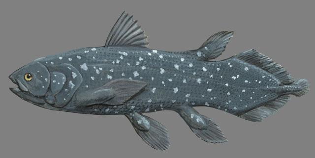 coelacanth characteristics