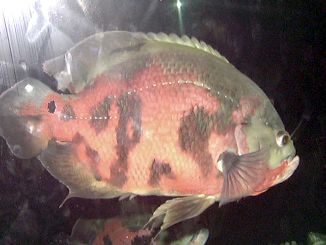 500 freshwater aquarium fish a visual reference to the most popular species