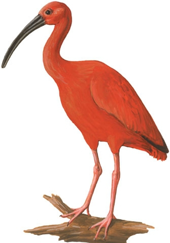 the scarlet ibis full text Best answer: some of the versions of the scarlet ibis found in the web, are not the full story i had to search through a lot of webpages to find it in full(this is.