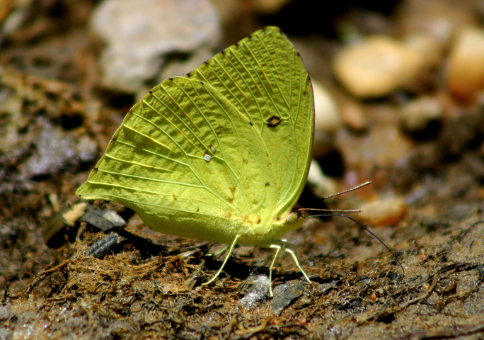Photo of Lepidoptera