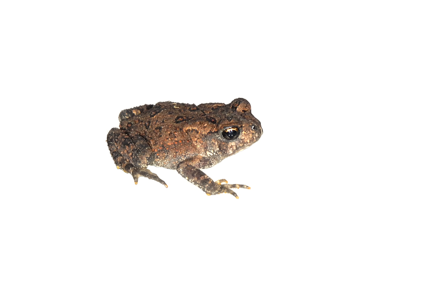 toad0969