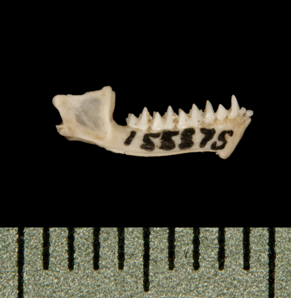 lower_lateral5939