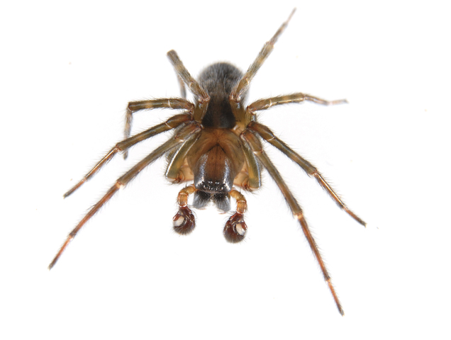 Photo of Lycosidae