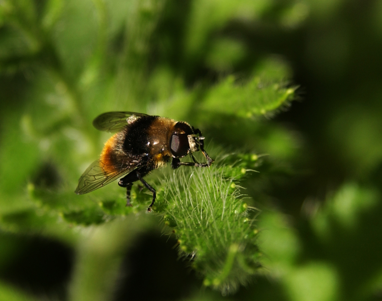 beefly0198